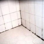 Grout Mildew on Tile